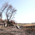 Desolation on the dry riverbed burnt cane and in shale rocks Royalty Free Stock Photo