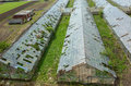 Destroyed greenhouses abandoned damaged and by the hail Royalty Free Stock Image
