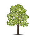 Detached linden tree with leaves and flowers Royalty Free Stock Photo