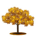 Detached tree with yellow leaves