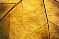 Detail of autumn textured leaf Royalty Free Stock Photo