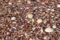 Background of seashells with brine
