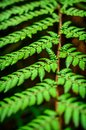 Detail of a beautiful leaf of fern close up Royalty Free Stock Photos