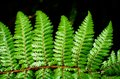 Detail of a beautiful leaf of fern close up Stock Images