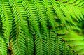 Detail of a beautiful leaf of fern close up Stock Image
