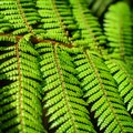 Detail of a beautiful leaf of fern close up Stock Photo