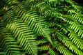 Detail of a beautiful leaf of fern close up Stock Photography