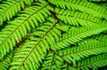 Detail of a beautiful leaf of fern close up Royalty Free Stock Image