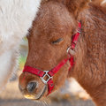 Detail of brawn young horse beautiful very Royalty Free Stock Images