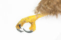 Detail of the claw and talons of a red tailed hawk over white background Stock Photo
