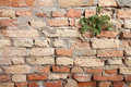 Detail of a dated wall in burano island venice Royalty Free Stock Photography