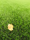 Detail of dry birch fall leaf on plastic grass field on football playground. Artificial grass Royalty Free Stock Photo