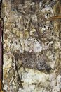 Detail of dry rot mycelium Royalty Free Stock Photo