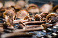 Detail of drying honey fungus in the oven close up Royalty Free Stock Photos