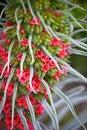 Detail of a flower seen at Villa Hanbury, Italy Royalty Free Stock Photo