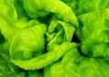 Detail Of Fresh Salad