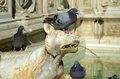Detail of gaia fountain from siena italy photo the the tuscan city Stock Image