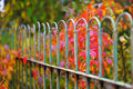 Detail of garden fence with colorful vegetation Royalty Free Stock Photo