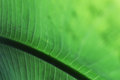Detail green leaf of a in the jungle Stock Photo