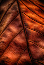 Detail of leaf editing with high dynamic range technique Royalty Free Stock Photos