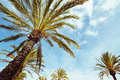 Detail little palm tree under sun Royalty Free Stock Images