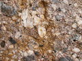 Detail look at conglomerate stone from czech republic Royalty Free Stock Image
