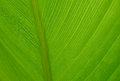 Detail Macro of a palm frond Royalty Free Stock Image