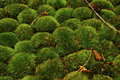 Detail of moss Royalty Free Stock Images