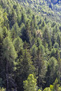 Detail of mountain trees from above Stock Images