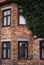 Detail of old building covered by ily. Old brick, abandoned house covered by green ivy. Royalty Free Stock Photo