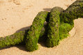 Detail of an old rope with green algae at the beach Royalty Free Stock Photo