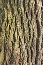 Detail of old tree bark Royalty Free Stock Photos