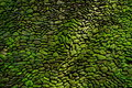 Detail of old wall with green moss Royalty Free Stock Photo