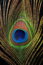 Detail of peacock feather eye Royalty Free Stock Photo