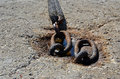 Detail photo of old big and rusty chain Royalty Free Stock Photo