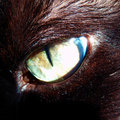 Detail photography of cat eye color macro black face Stock Photo