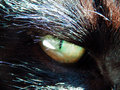 Detail photography of cat eye color macro black face Stock Photography