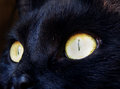 Detail photography of cat eyes color macro black face Stock Photos