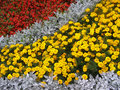 Detail photography of flower-bed Royalty Free Stock Image