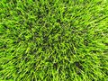 Detail of plastic grass field on football playground. Detail of a cross of painted white lines in a soccer field. Artificial grass Royalty Free Stock Photo