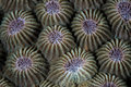 Detail of Reef-Building Coral in Tropical Pacific Royalty Free Stock Photo