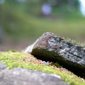 Detail of a rock with moss on it