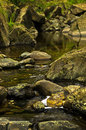 Detail of rocks in water at black river gorge west serbia Royalty Free Stock Photos