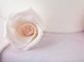 Detail Of Rose On Wedding Cake