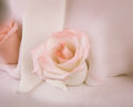 Detail of rose on wedding cake Royalty Free Stock Photo