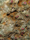 Detail, rubies in mica schist, Royalty Free Stock Image