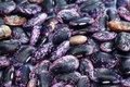 Detail, scarlet runner beans Royalty Free Stock Images