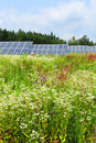 Detail of the solar power station on the meadow in sunny day Royalty Free Stock Image