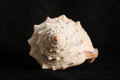 Detail of spiral seashell Royalty Free Stock Photo