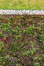 Detail of stones on extensive green living roof vegetation covered Royalty Free Stock Photo